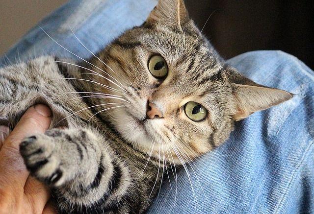 macska_harap