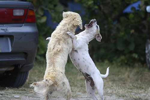 verekedo-kutyusok