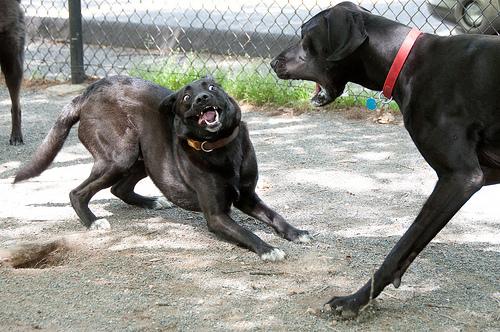 verekedo-kutyak