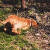 A kutyák ásásának megelőzése