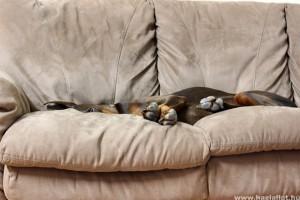 Felfúvódás a kutyáknál