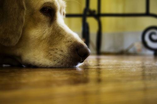 Szomorkás kutya