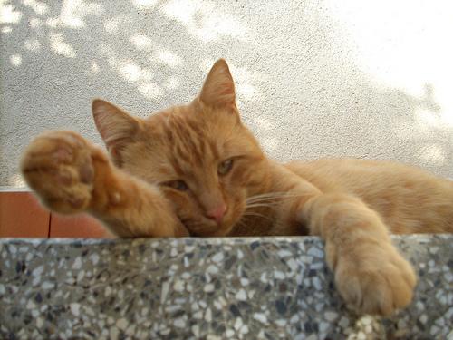 macska, cica, macskás kép, cicus
