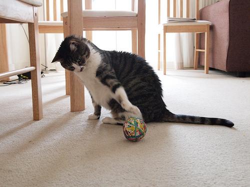macska, cica, cicás játékok