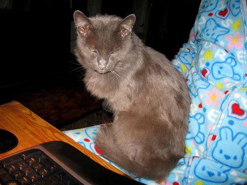 A képen látható macska kétségtelenül jó kezekben volt: ő már 24 éves
