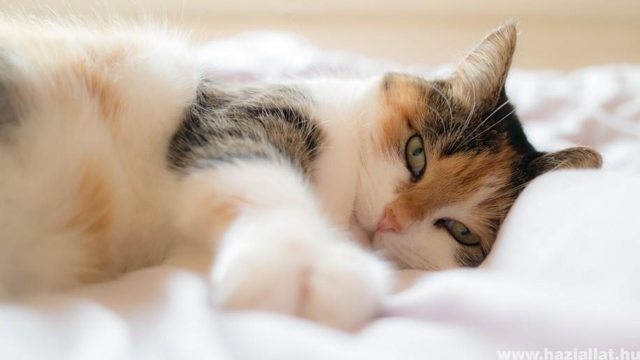 Idős macskák leggyakoribb egészségügyi problémái