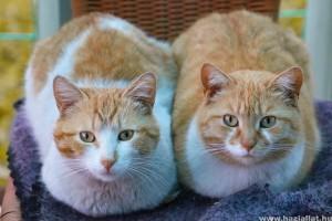 Több cica egy házban? Így kezd az összeszoktatást
