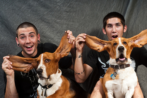 nagyfulu-kutyak