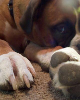 A kutyamancs fokozott figyelmet igényel a gazdi részéről