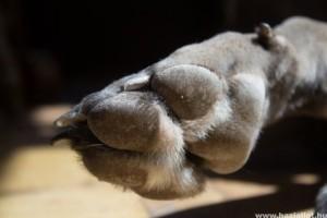 A kutyák farkaskarma odafigyelést igényel