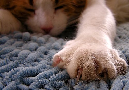A macskakarom multifunkcionális tartozék
