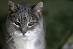 Egy idősebb macska állatmenhelyről való örökbefogadása