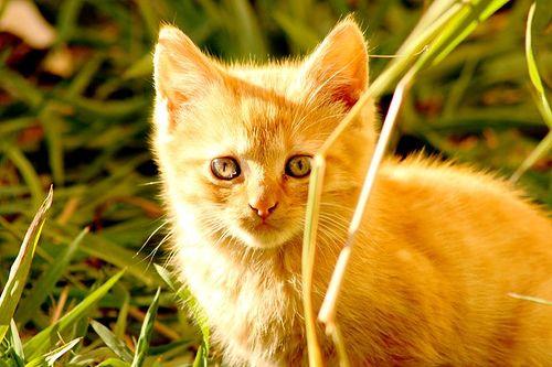 Fontos feladat az új jövevény állatorvos általi vizsgálata