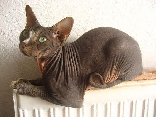 A fürdetés és karmok vágása a macska szükségletei szerint történik
