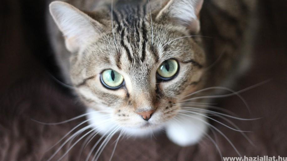 Hogyan adjunk be gyógyszert kutyának, macskának?