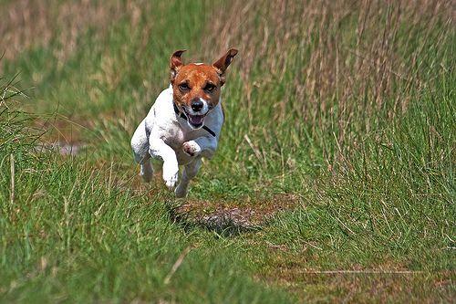 Szaladó kutya