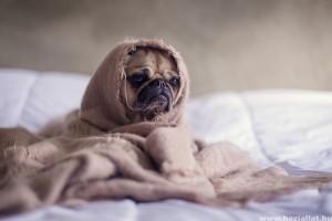 Székrekedés kutyáknál: hogyan kezeljük házilag, és mit adhatunk enni a kedvencünknek?