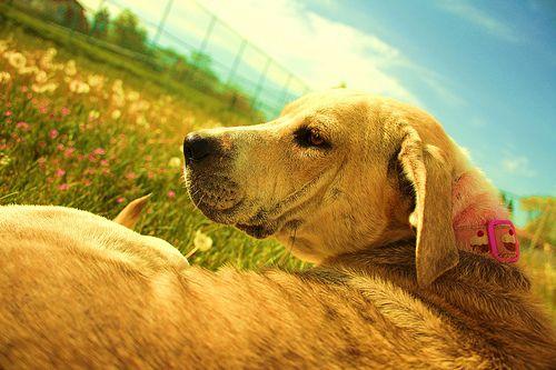 A gondos gazdi mindent megtesz annak érdekében, hogy boldog és egészséges kutyája legyen