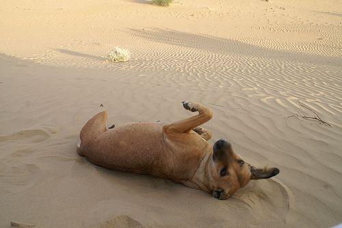 A kutyák általában ellenállóak a fertőzésre nézve