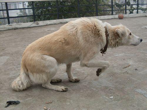 Kutyád más négylábúakkal érintkezve átadhatja a fertőzést