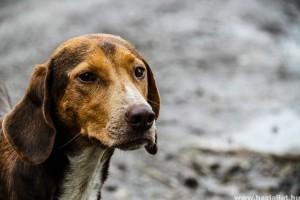 Hasmenés kutyáknál