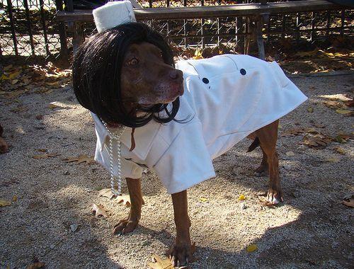 kutya-oltoztetes