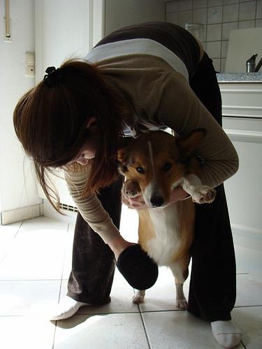 kutya, kutyaápolás, kutya fésülés