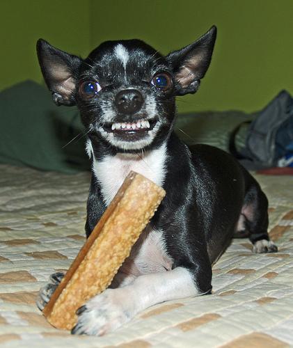 kutya, kutya foga, kutya fog ápolás