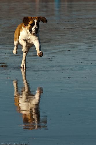 kutya, kutyás kép, szaladó kutya, mozgó kutya