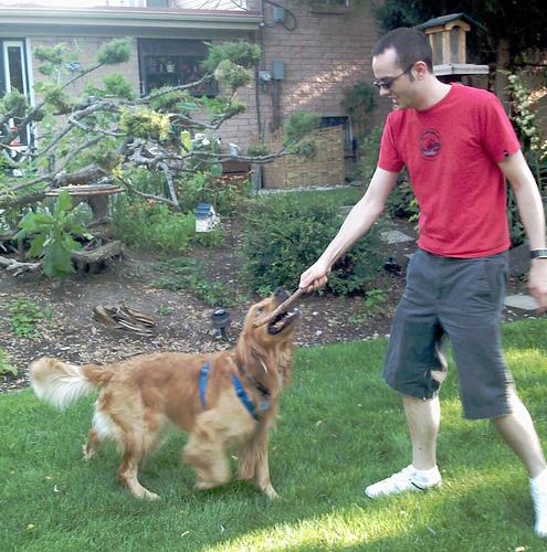 kutyás kép, kutya, kutya bot