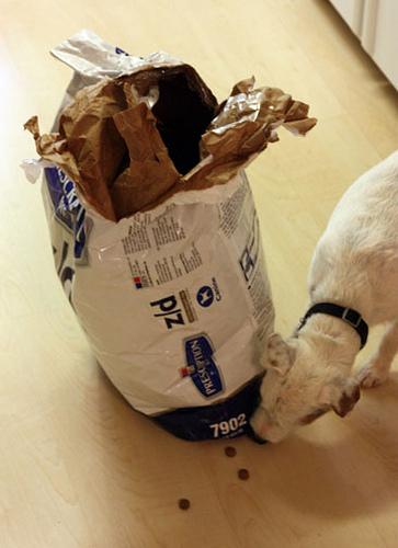 kutya, kutyás kép, kutyaeledel, kutya eszik