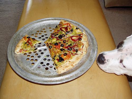 kutya, kutyás kép, kutyatáplálék