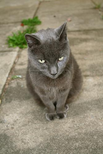 macska, macskás kép, meteg macska, cicás kép