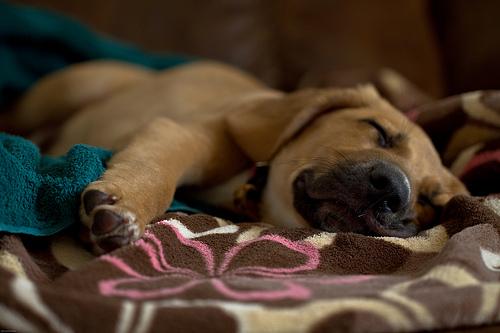 kutyás kép, kutya, alvó kutya, fáradt kutya