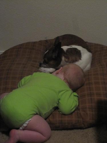 kutya, alvó kutya, kutyás kép, kutya baba