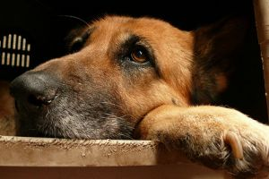 Milyen a jó kutyaház és kutyaágy?