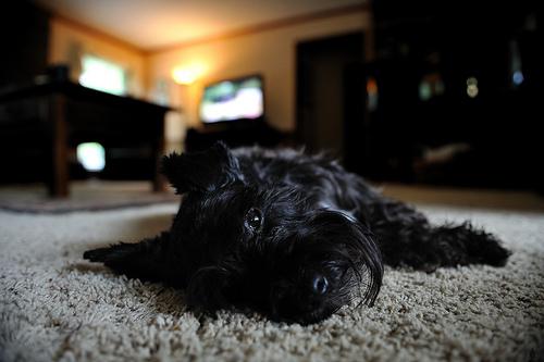 kutyás kép, kutya a házban, kutya