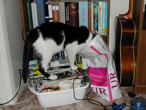 szaraz-macskakaja