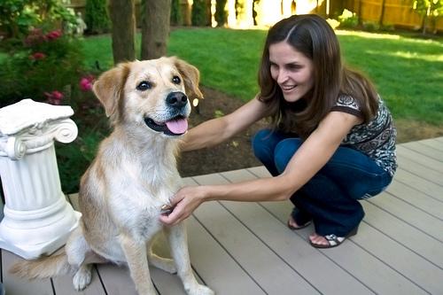 kutyás kép, kutya
