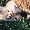 Milyen a háziállatod személyisége? - Állathoroszkóp