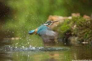 A kánikulában létfontosságú a madarak itatása!