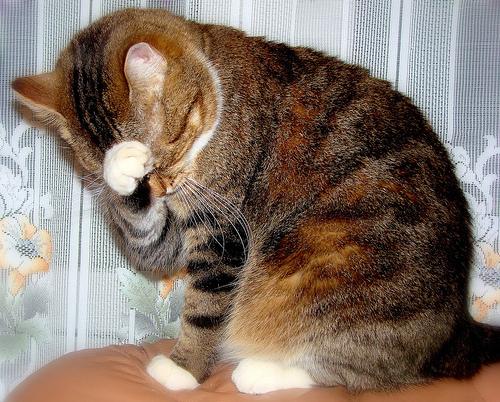 macskás kép, cicás kép, cica, macska