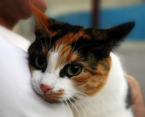 cica, macska, cicás kép, macskás kép