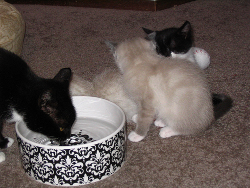 macska, cica, kiscicák, kismacskák, cicás kép, macskás kép