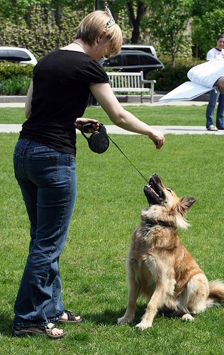 kutyás kép, kutya, kutya trükk, kutya jutalmazása