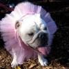 Kutyaruhák: a divattervezők bemutatják a kizárólag kutyáknak szánt alkotásaikat