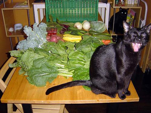 macska, cica, macskás kép, cicás kép, macska zöldség