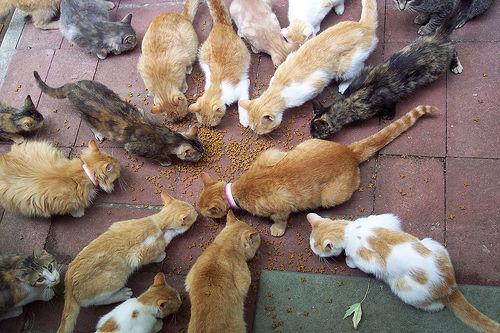 macska, macskák, cica, cicák, macskás kép, cicás kép