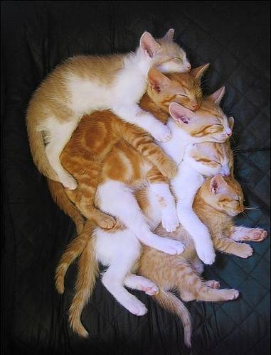 Sok cica