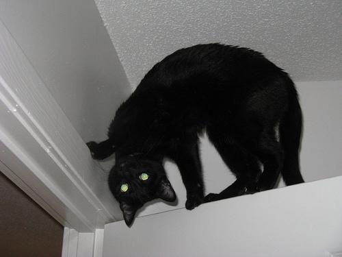 macska, cica, cicás kép, macskás kép, macska trükk